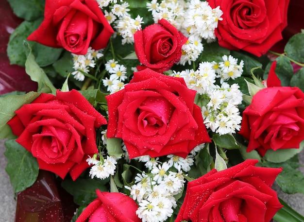 Czerwone róże z kropli wody