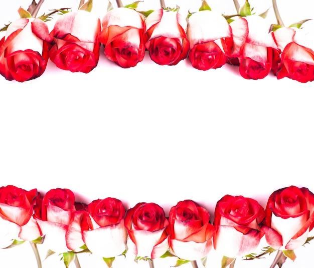 Czerwone róże z rzędu na białym tle