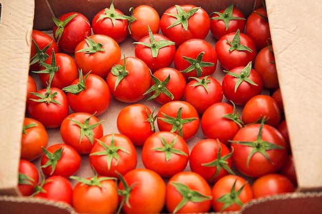 Czerwone świeże pomidory zebrane w kartonowe pudełko na sprzedaż.