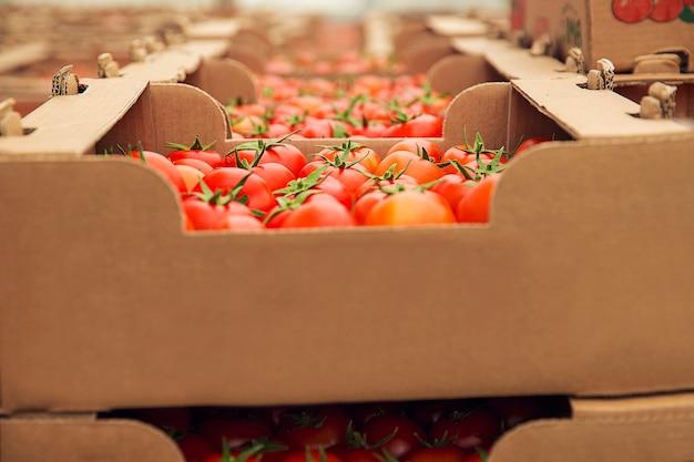 Czerwone świeże pomidory zebrane w kartonowe pudła do zakupu.