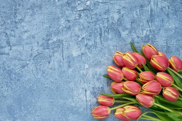 Czerwone tulipany na niebieskim tle. tło wakacje, miejsce na kopię. urodziny, dzień matki, koncepcja walentynki.