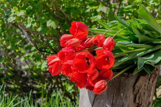 Czerwone tulipany na zielonej przyrody. naturalny styl
