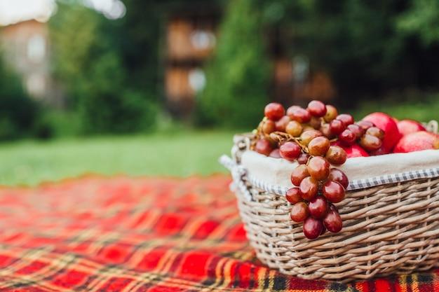 Czerwone winogrona w koszu i sekatorach ogrodowych
