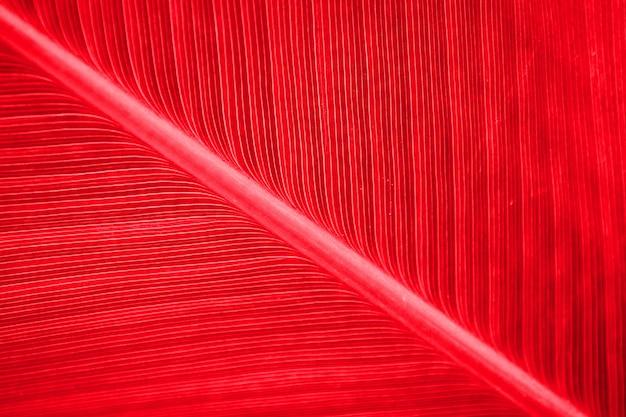 Czerwone wzory liści