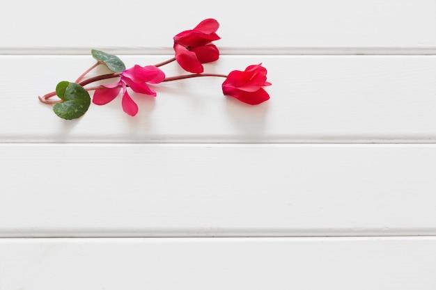 Czerwoni cyklameny na drewnianym stole
