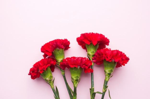 Czerwoni goździki na różowym tle z kopii przestrzenią. karta na dzień matki, walentynki.