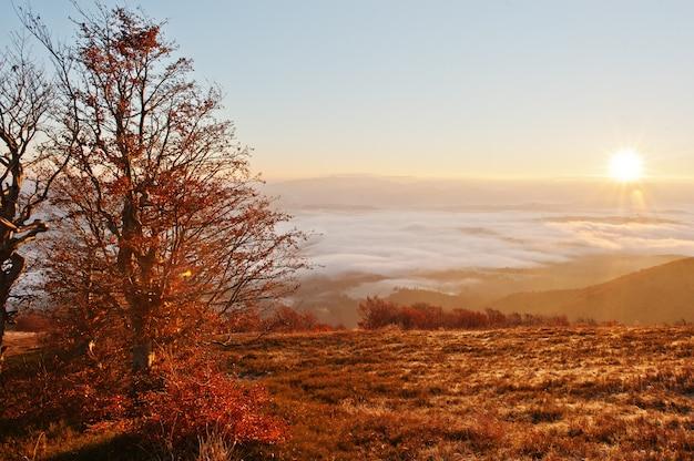 Czerwoni kolorowi jesieni drzewa z światłem słonecznym