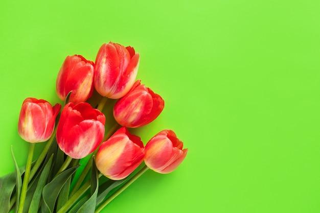 Czerwoni tulipany kwitną na zielonym tle