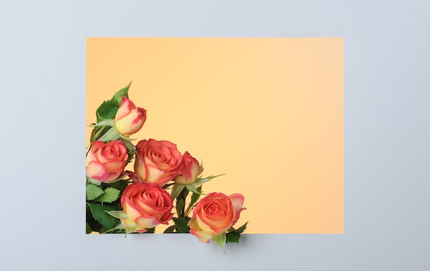 Czerwono-żółte róże w prostokątnej papierowej szarej ramce na żółtej powierzchni