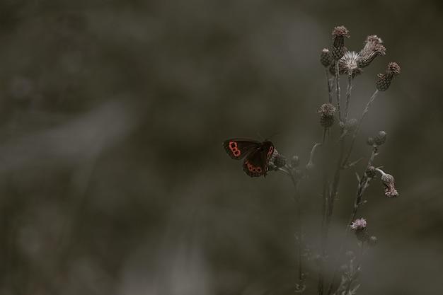 Czerwony admirał motyl perching na kwiatek