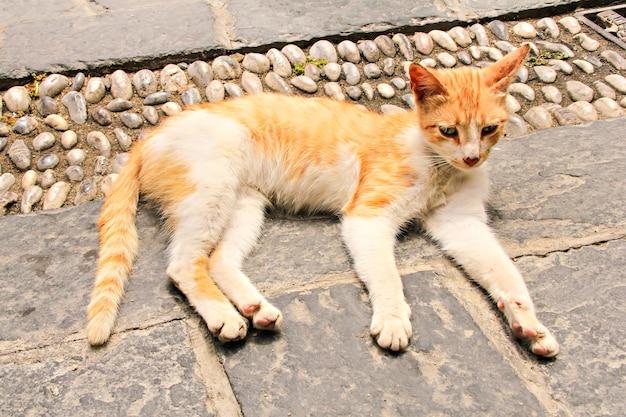 Czerwony bezpański kot leżący na ulicy starego miasta, rodos, grecja
