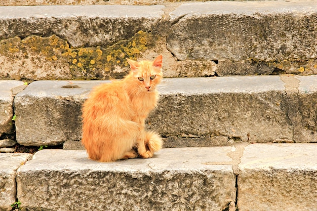 Czerwony bezpański kot na schodach na starym mieście rodos, grecja