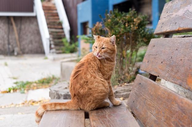 Czerwony bezpański kot siedzi na drewnianej ławce w parku miejskim. koncepcja ochrony i adopcji zwierząt.