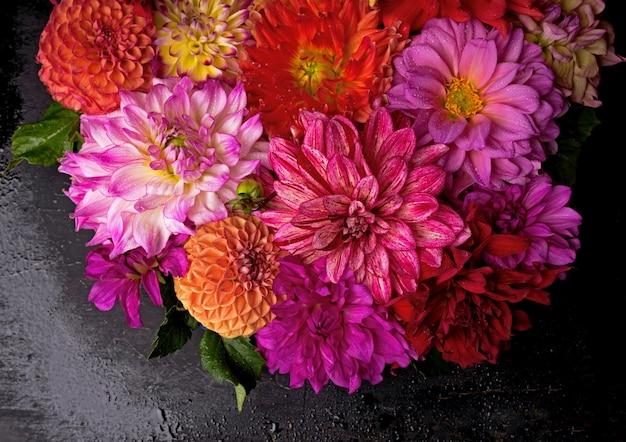 Czerwony, biały, żółty dalia sierpień kolorowe tło. widok na wielokolorowe kwiaty dalii.
