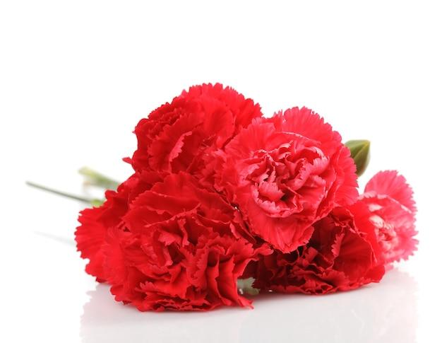 Czerwony goździk kwiat na białym tle