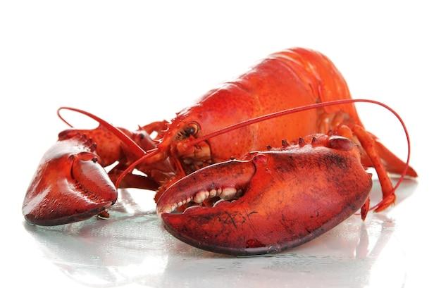 Czerwony homar na białym tle