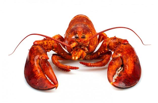 Czerwony homar