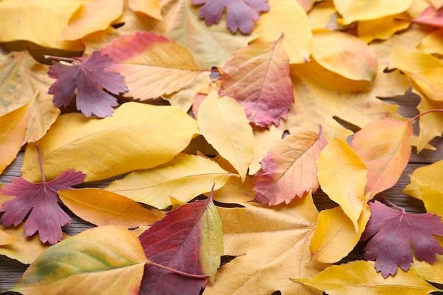 Czerwony i pomarańczowy jesień liści tło