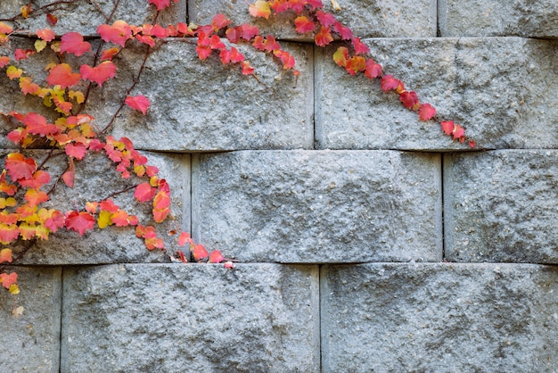Czerwony jesień liść na kamiennym ściana z cegieł.