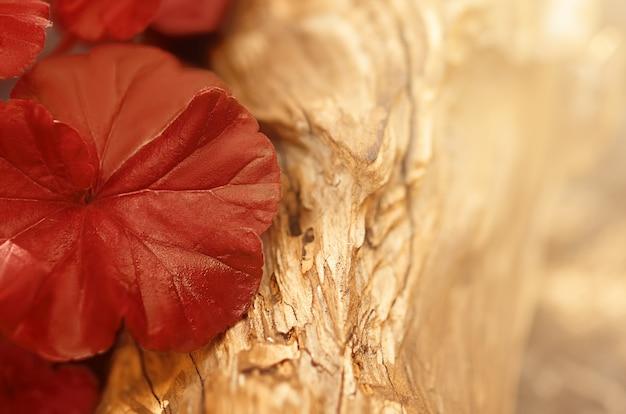 Czerwony jesienny liść na drewnianej powierzchni