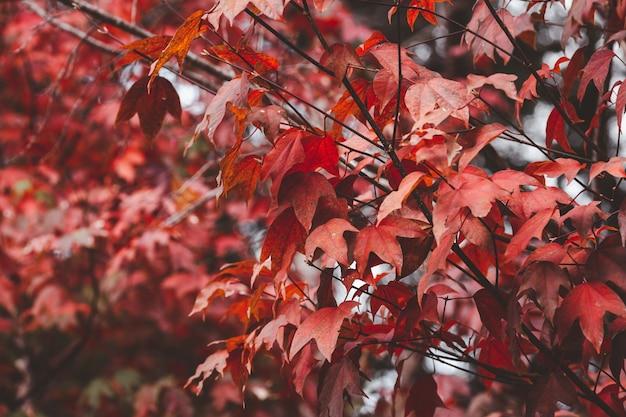 Czerwony jesienny urlop natura tło