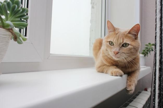 Czerwony kot leżący na parapecie obok roślin doniczkowych. alergeny w domu. naturalne światło