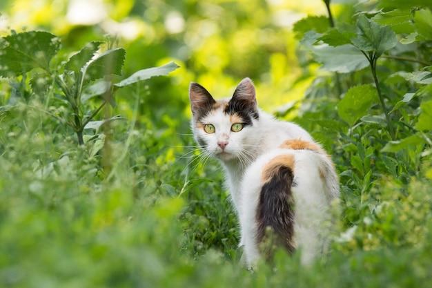 Czerwony kot na trawie