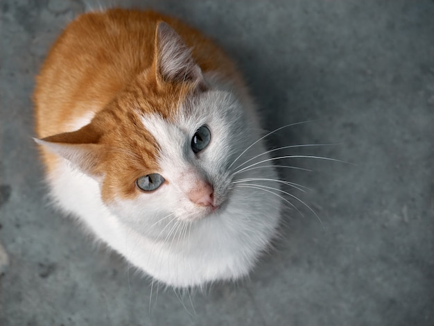 Czerwony kot na ulicy.