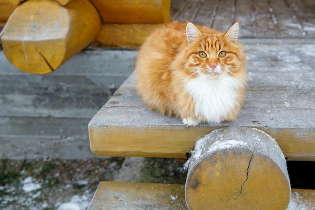 Czerwony kot siedzi zimą na ganku drewnianego domu