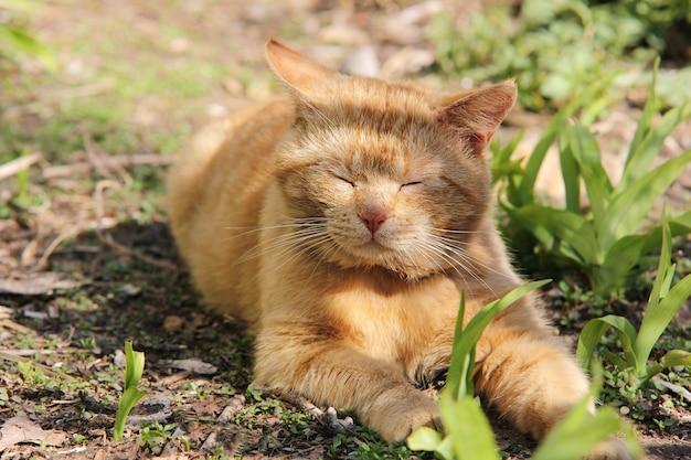 Czerwony kot śpi na zewnątrz wśród zielonej trawy w słoneczny wiosenny dzień.