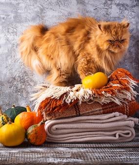 Czerwony kot stoi na stosie pledów