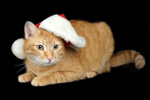 Czerwony kot w czapce mikołaja leży na czarnym tle, karcie boże narodzenie i nowy rok.