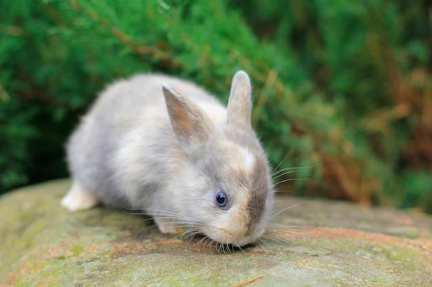 Czerwony królik o ciemnych oczach siedzący na skale. zdjęcie futrzanego zwierzaka.