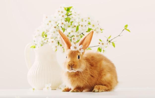 Czerwony królik z wiosną kwitnie na białym tle