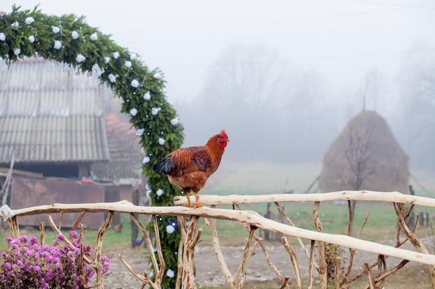 Czerwony kurczak stojący na drewnianym płocie