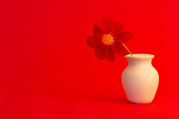 Czerwony kwiat dalii w białym dzbanku na czerwonym tle z zbliżoną przestrzenią na kopię