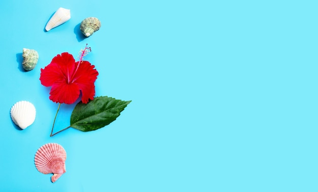 Czerwony kwiat hibiskusa z egzotycznymi muszelkami na niebieskiej powierzchni
