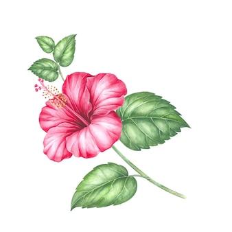 Czerwony kwiat hibiskusa.