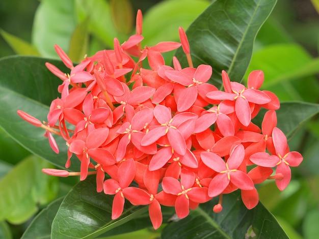 Czerwony kwiat kolec