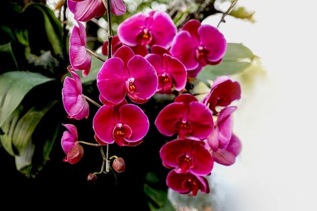 Czerwony kwiat orchidei w wiosennej łące w tle ogrodu.