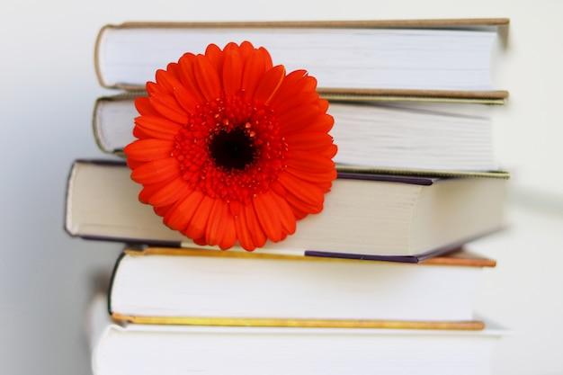 Czerwony kwiat w książkach, czerwony gerbera