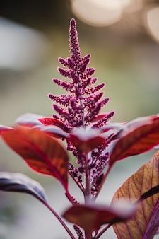 Czerwony kwiat w soczewce z funkcją tilt shift