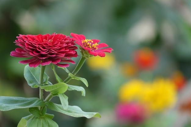 Czerwony kwiat z nieostrym tłem