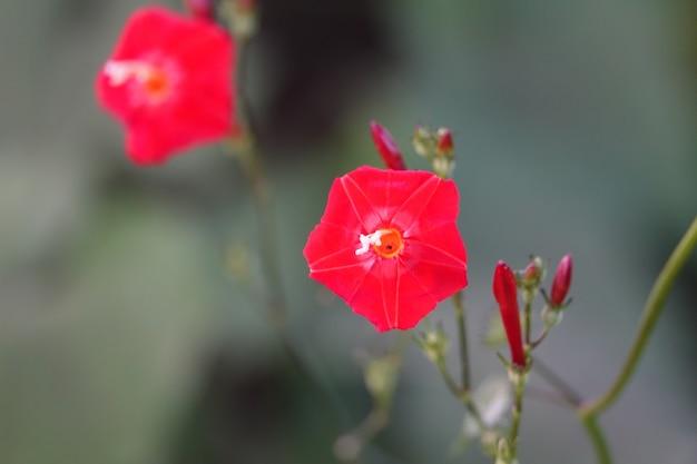 Czerwony kwiat z niewyraźne tło