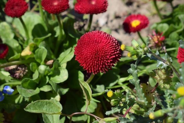 Czerwony kwiat z zielonymi liśćmi, selekcyjnej ostrości tła plama