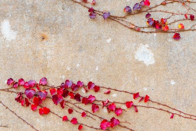 Czerwony liść bluszczu na brązowej betonowej ścianie z miejscem na kopię dla swojego projektu.