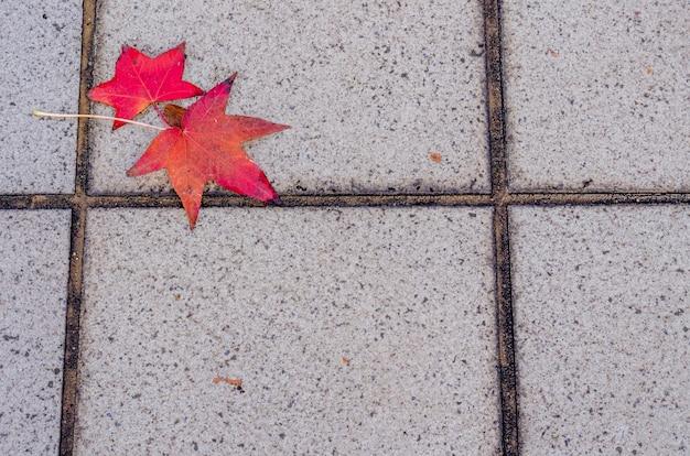 Czerwony liść klonu na przejściu