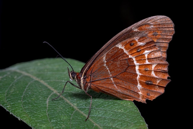 Czerwony motyl siedzący na zielonych liściach i czarnym tle