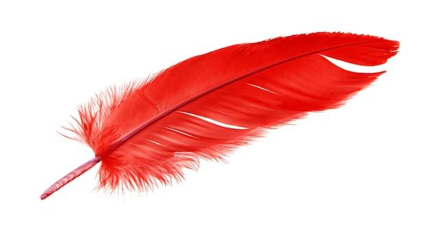 Czerwony ptasi piórko odizolowywający na białym tle.