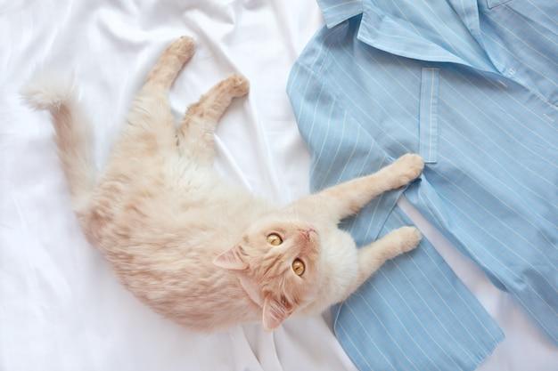 Czerwony puszysty kot leżący na łóżku z piżamą.
